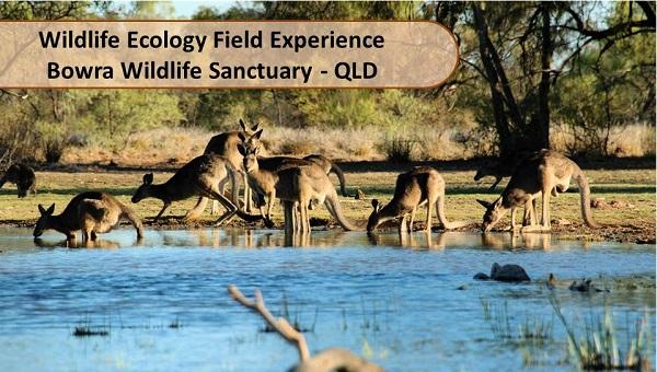 Bowra Wildlife Sanctuary  Field Course