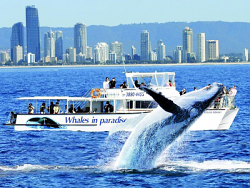 Whale Watch Cruise - Gold Coast Campus